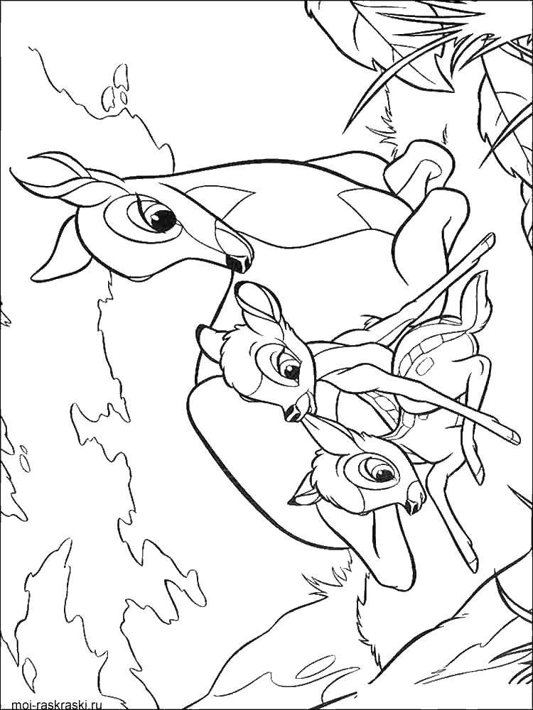Раскраска Мама бэмби с оленятами Скачать бэмби, Фэли́н.  Распечатать ,бэмби,
