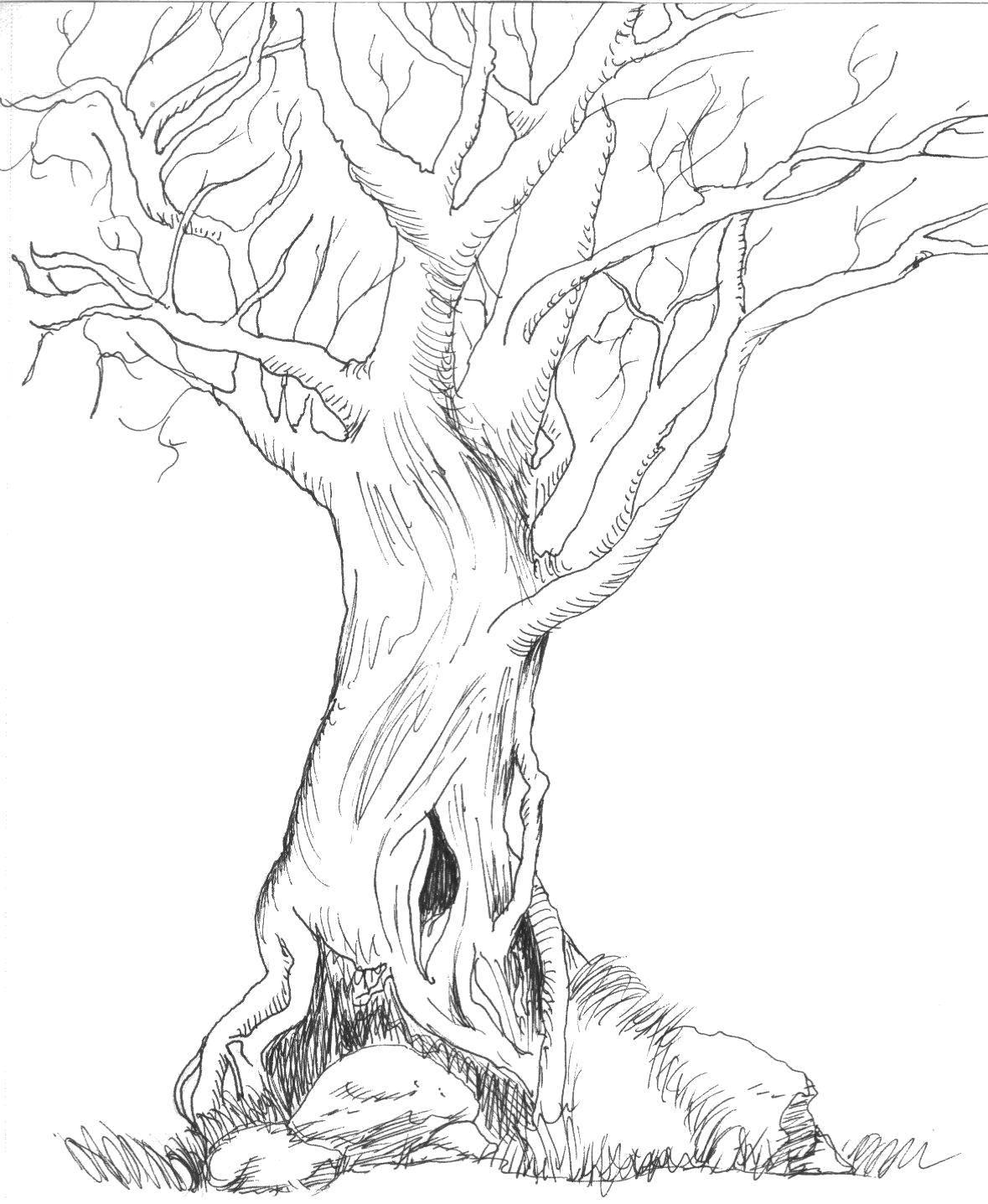 Раскраска Сухое деревце Скачать Деревья.  Распечатать ,дерево,