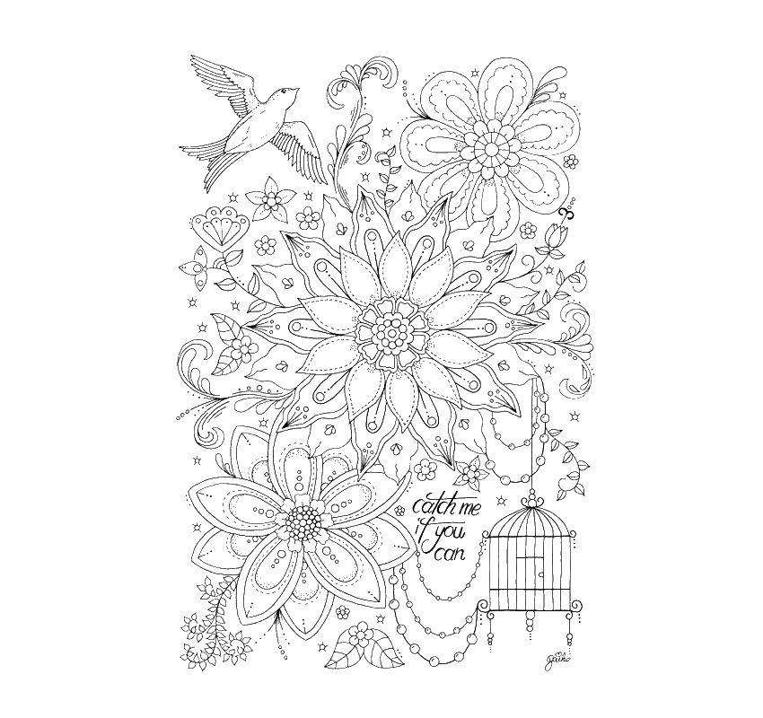 Раскраска цветы Скачать ,семья, члены семьи,.  Распечатать
