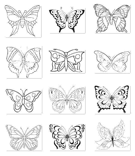 Раскраска бабочки Скачать ,бабочка,.  Распечатать