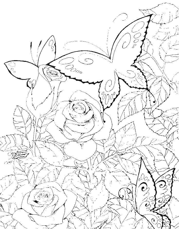 Раскраска бабочки Скачать бэтмен, плащ, маска.  Распечатать ,супергерои,