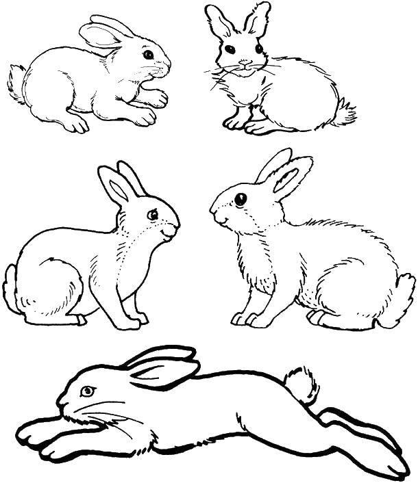 Раскраска кролик Скачать Дисней, принцесса.  Распечатать ,Диснеевские мультфильмы,