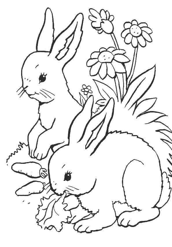 Раскраска кролик Скачать одежда, барби, девочки.  Распечатать ,одежда,