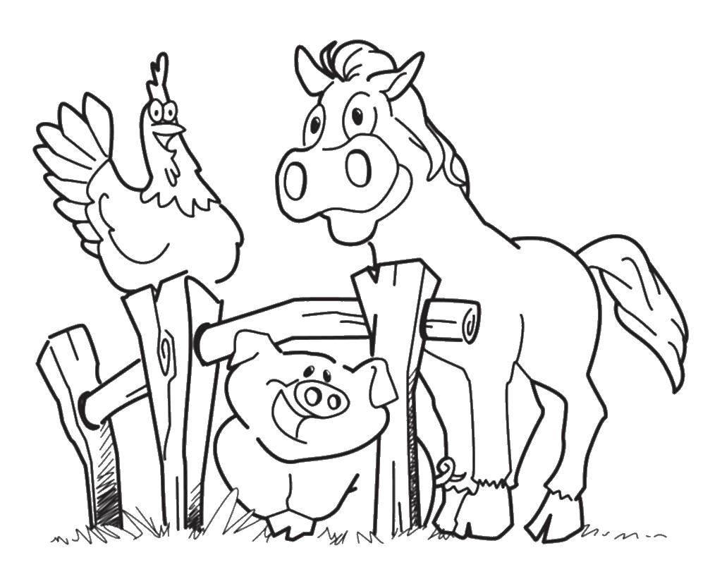 Раскраска Ферма Скачать ,ферма, животные, свинья, лошадь, петух,.  Распечатать
