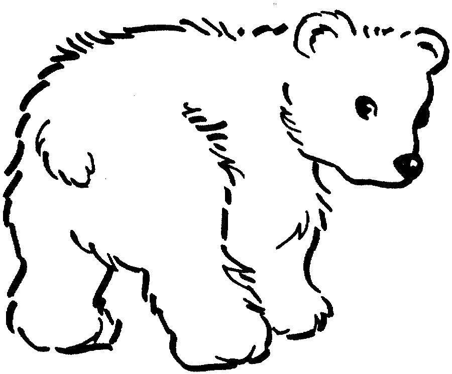Раскраска Медведь Скачать медведь.  Распечатать ,Животные,