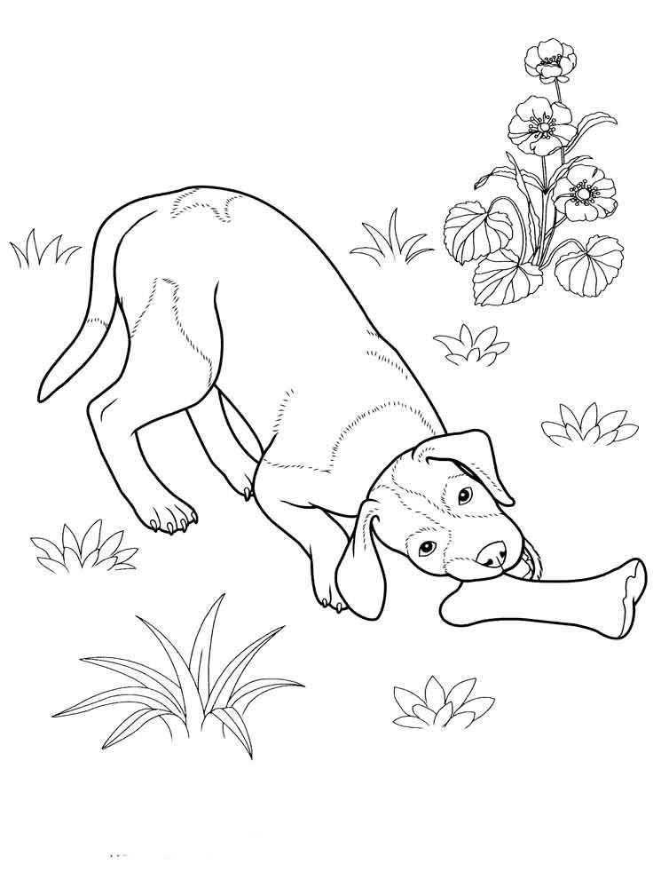 Раскраска домашние животные Скачать ,спанч боб, губка боб квадратные штаны, мультфильмы,.  Распечатать