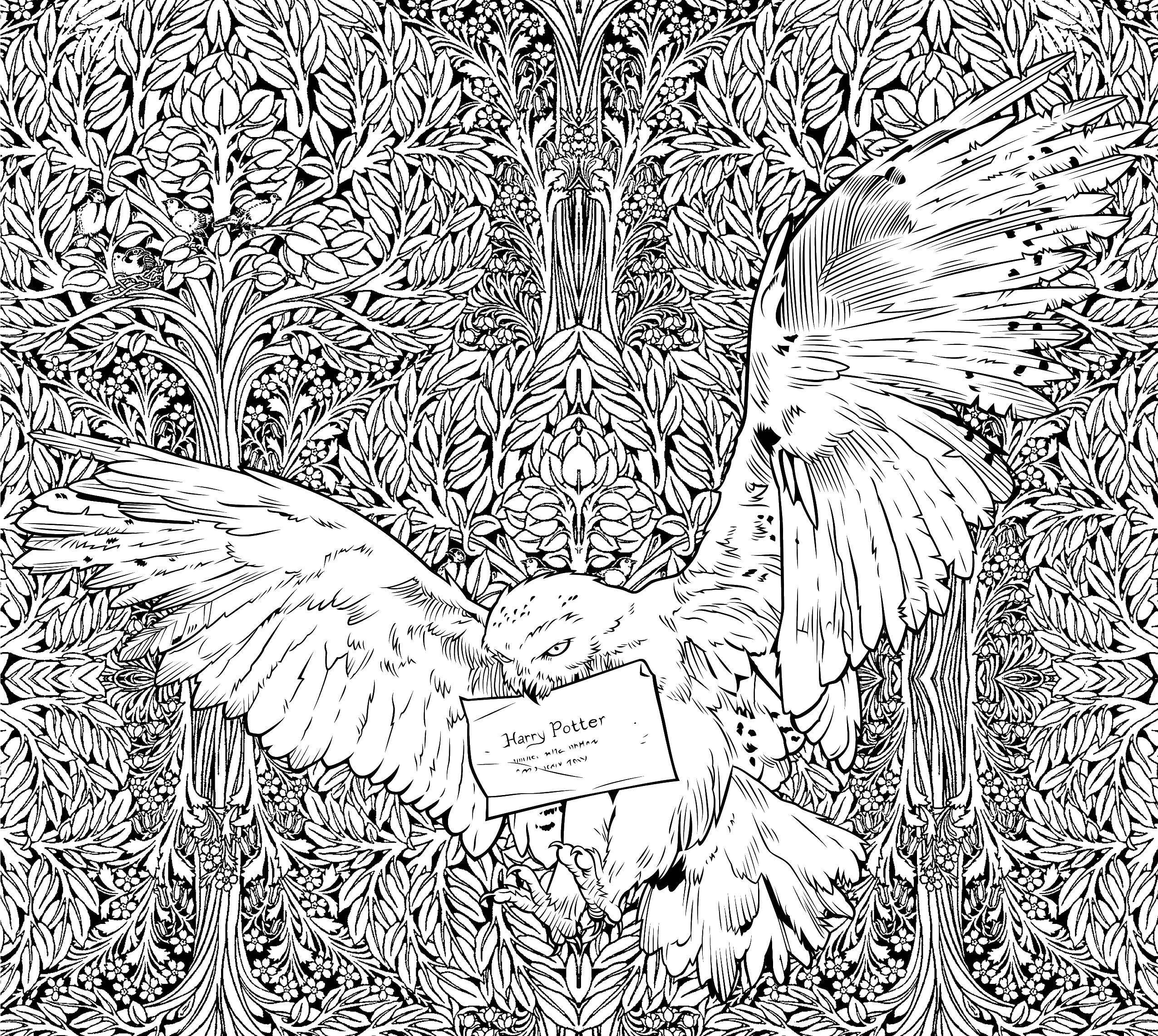 раскраски гарри раскраска почтовая сова принесла письмо