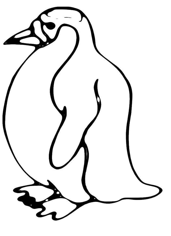 Раскраска пингвин Скачать девочка, платье, глаза.  Распечатать ,мой маленький зоомаганиз,