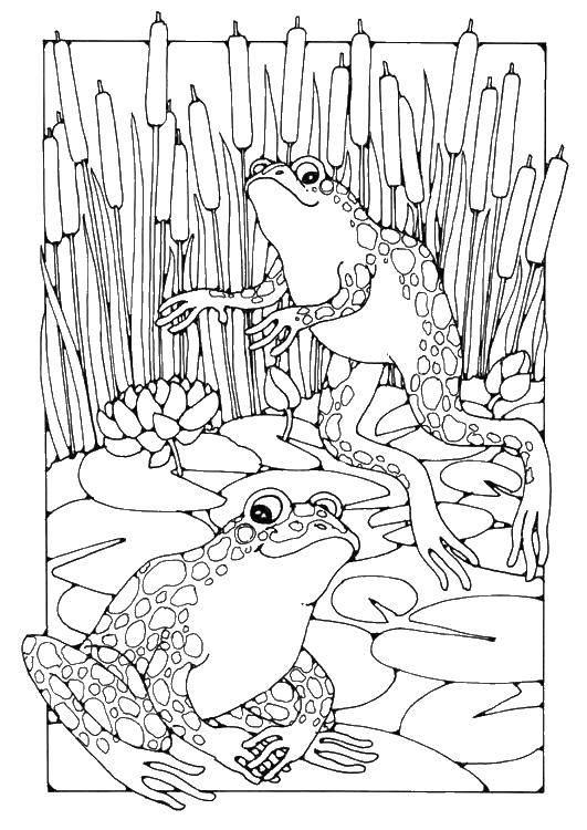 Раскраска Лягушки в камышах. Скачать животные, лягушка.  Распечатать ,Животные,