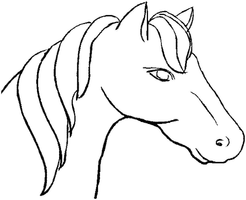 Раскраска лошади Скачать .  Распечатать