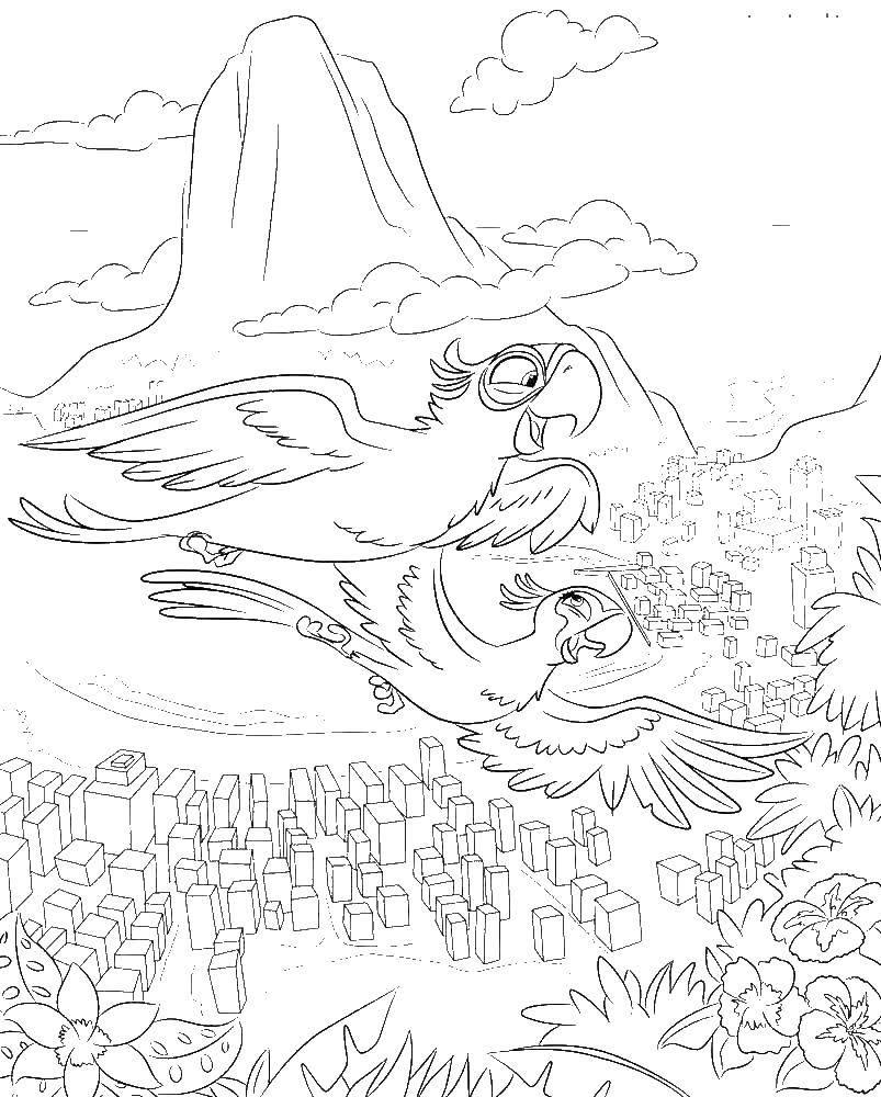 Раскраска Голубчик и жемчужинка Скачать Голубчик , попугай, голубой ара.  Распечатать ,рио,