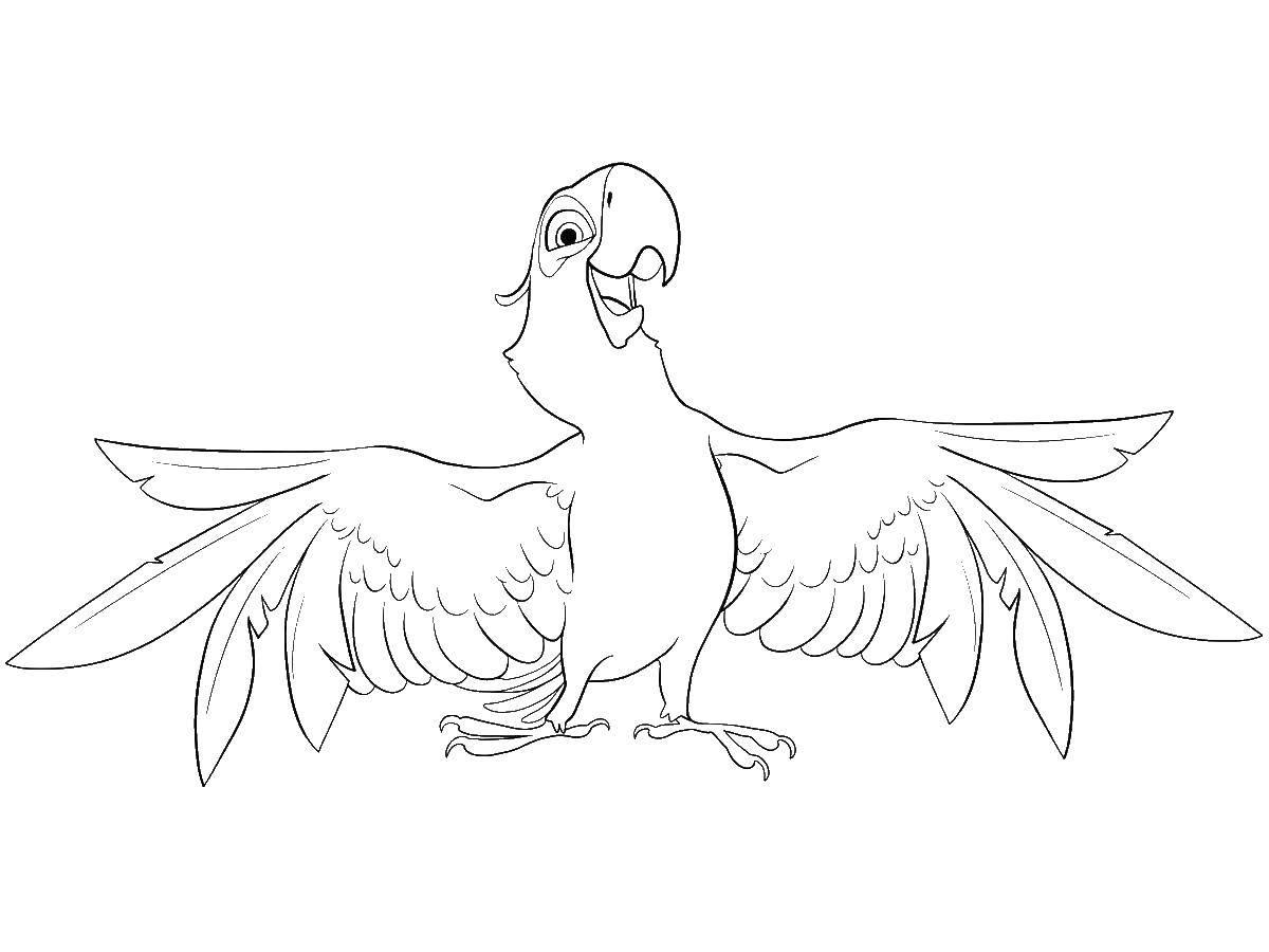 Раскраска Голубчик попугай голубой ара Скачать Голубчик , попугай, голубая ара.  Распечатать ,рио,