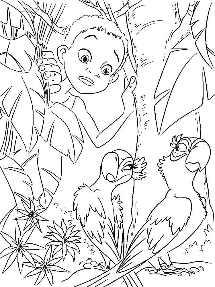 Раскраска Мальчик нашел попугаев Скачать ,Рио, Линда, Тулио, Голубчик, Жемчужинка,.  Распечатать