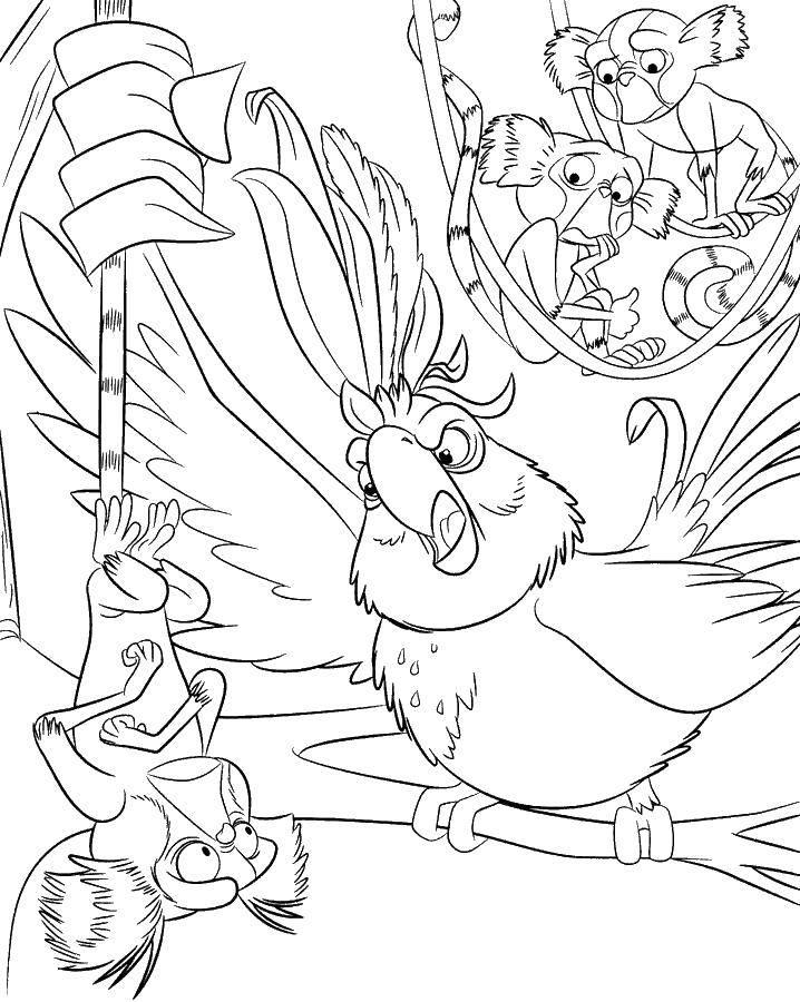 Раскраска Попугаи рио Скачать рио, голубой ара, попугай.  Распечатать ,рио,