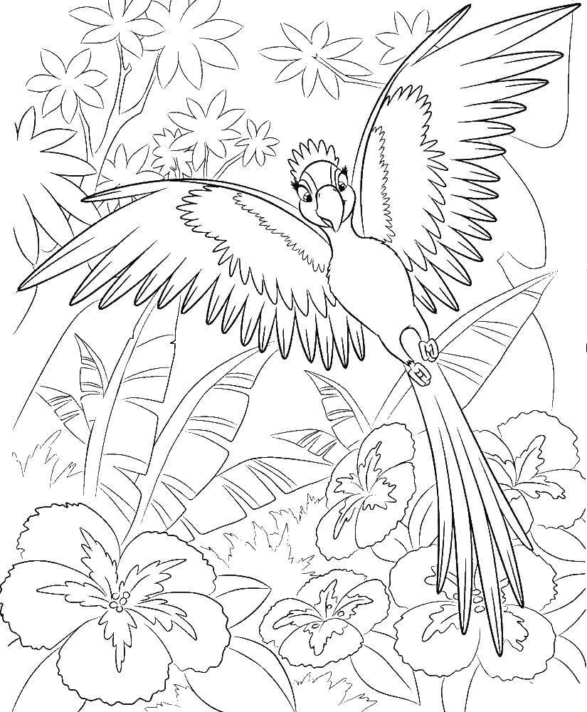 Раскраска Жемчужинка попугай возлюбленная голубчика Скачать Жемчужинка, Голубчик , попугай, .  Распечатать ,рио,
