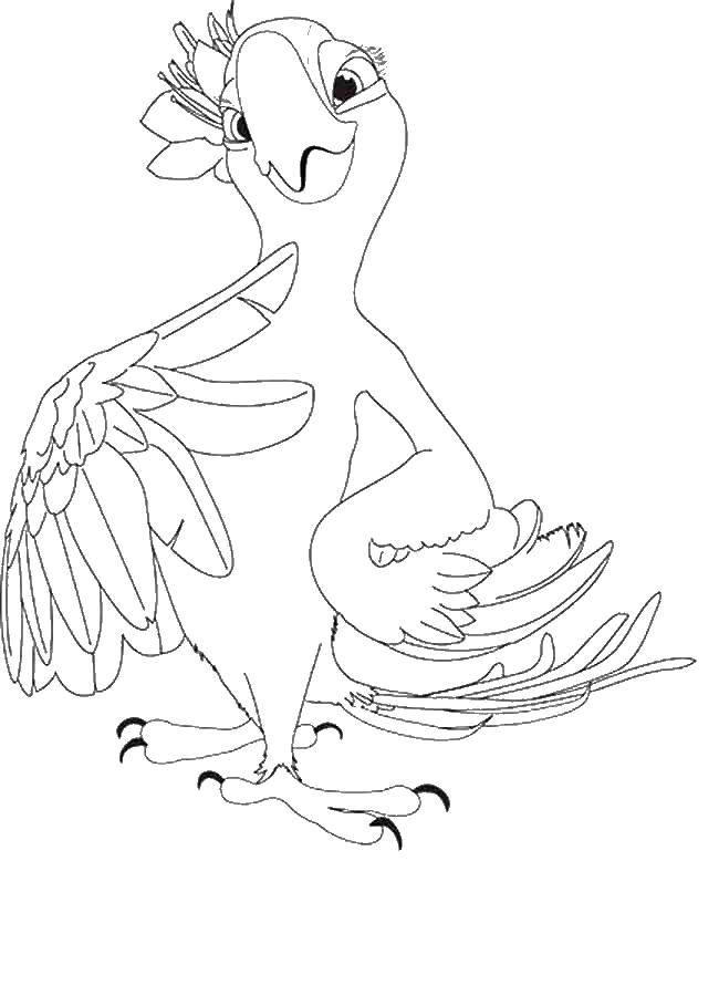 Раскраска рио Скачать ,рио, голубой ара, попугай,.  Распечатать