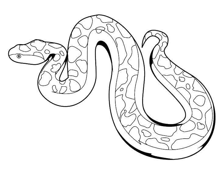 Раскраска змея Скачать собака в узорах, собака хаски.  Распечатать ,собаки хаски,
