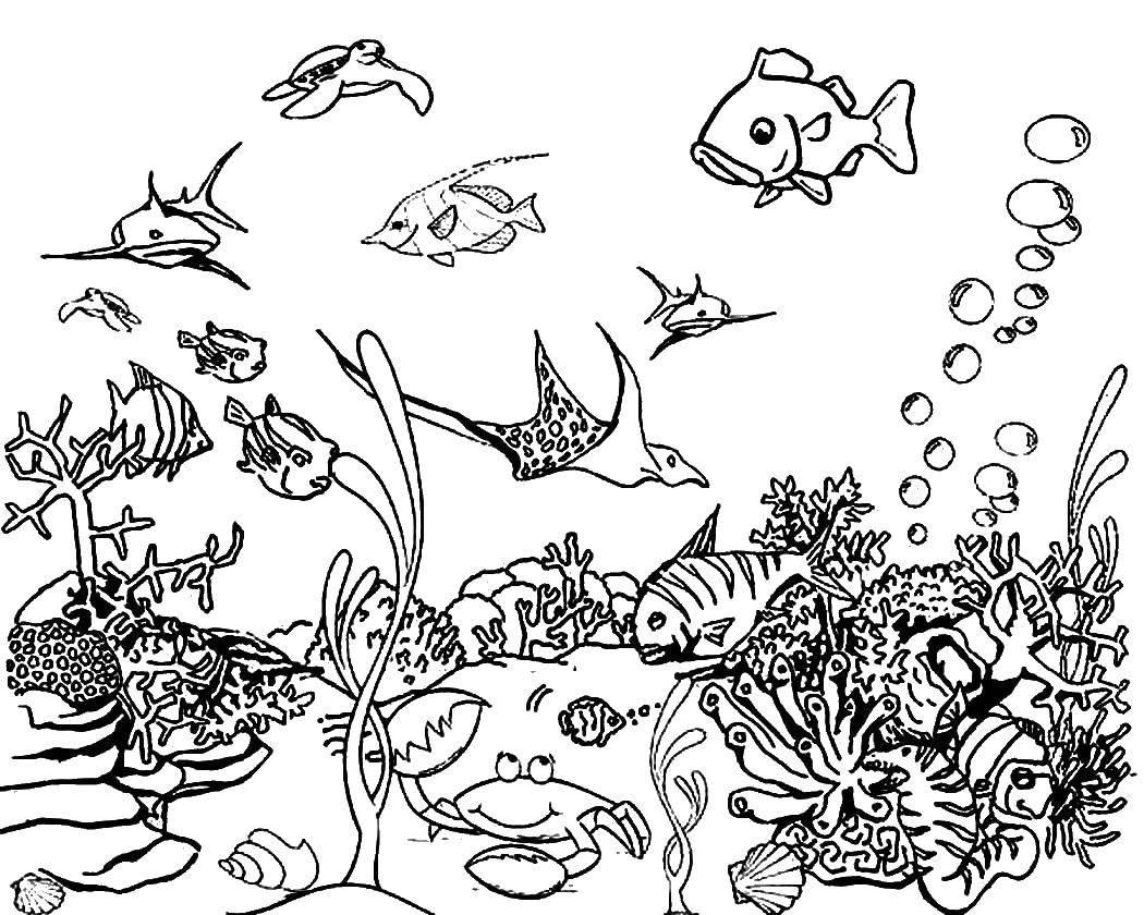 Раскраска Океан Скачать шопкинс, торт.  Распечатать ,раскраски,