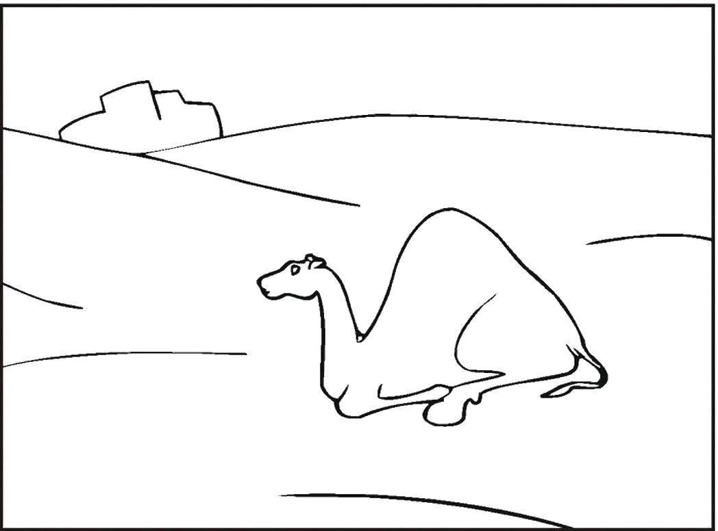 Раскраска Пустыня Скачать черепашка ниндзя, черепашки, оружие, мультики.  Распечатать ,черепашки ниндзя,