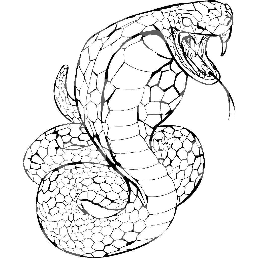 Раскраска змея Скачать кирби, мультики.  Распечатать ,Кирби,