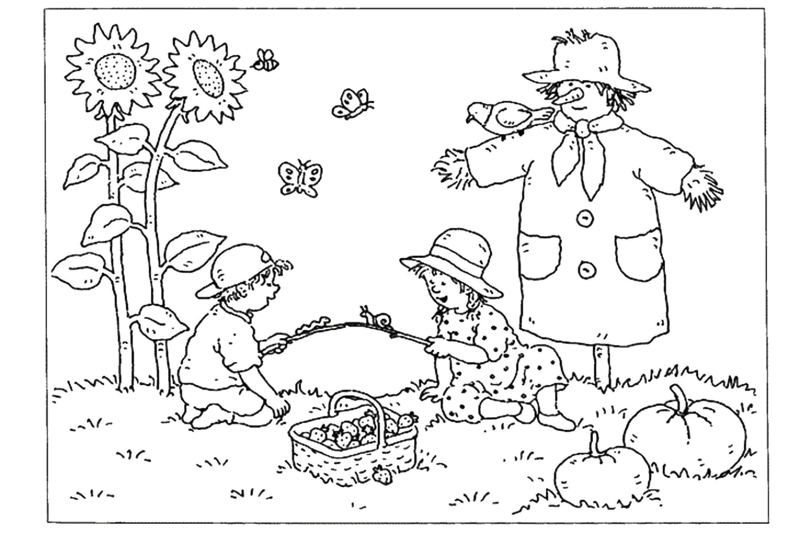 Раскраска Дети собирают ягоды в огороде Скачать дети, ягоды, пугало.  Распечатать ,ягоды,