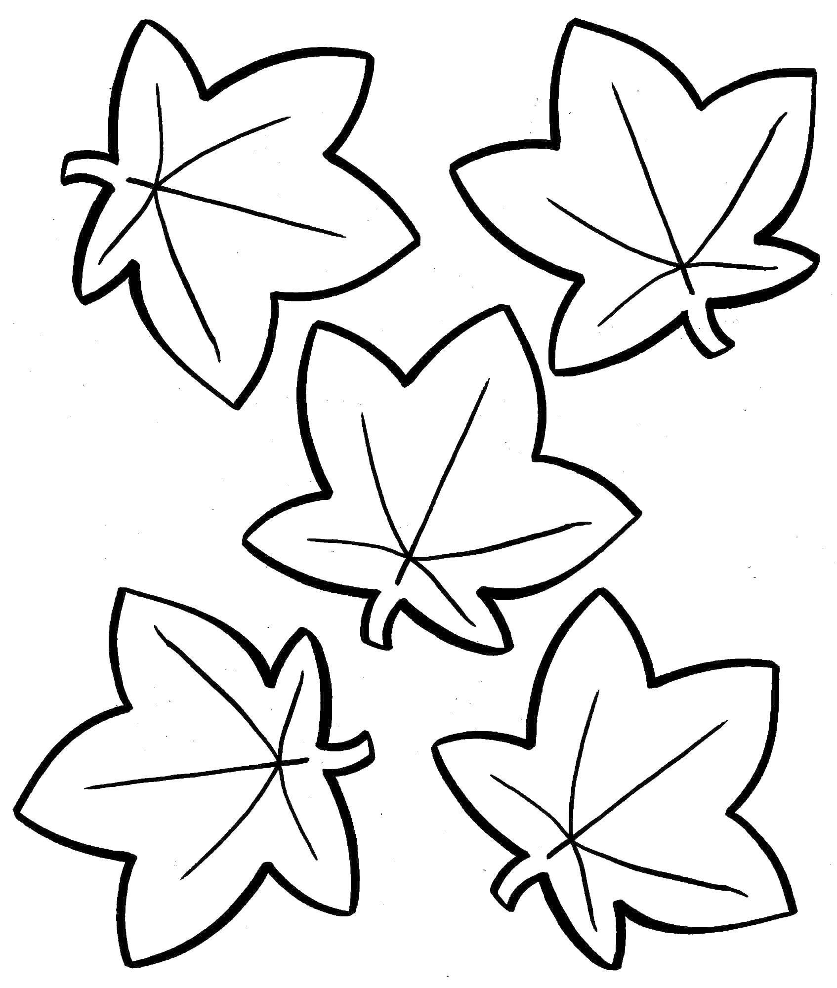 Раскраска Осенний листопад Скачать ,Рождество, елка, Новый год, подарки,.  Распечатать