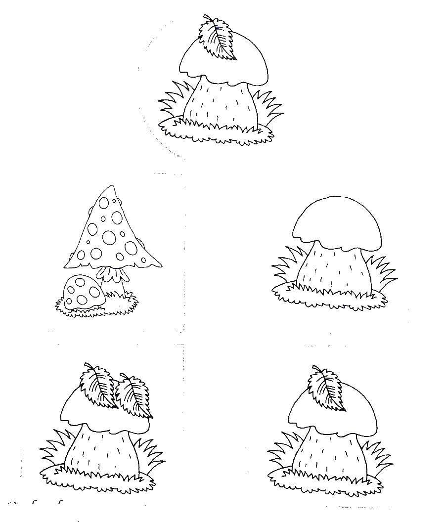 Раскраска Грибочки Скачать ,грибы, пара, грибы,.  Распечатать