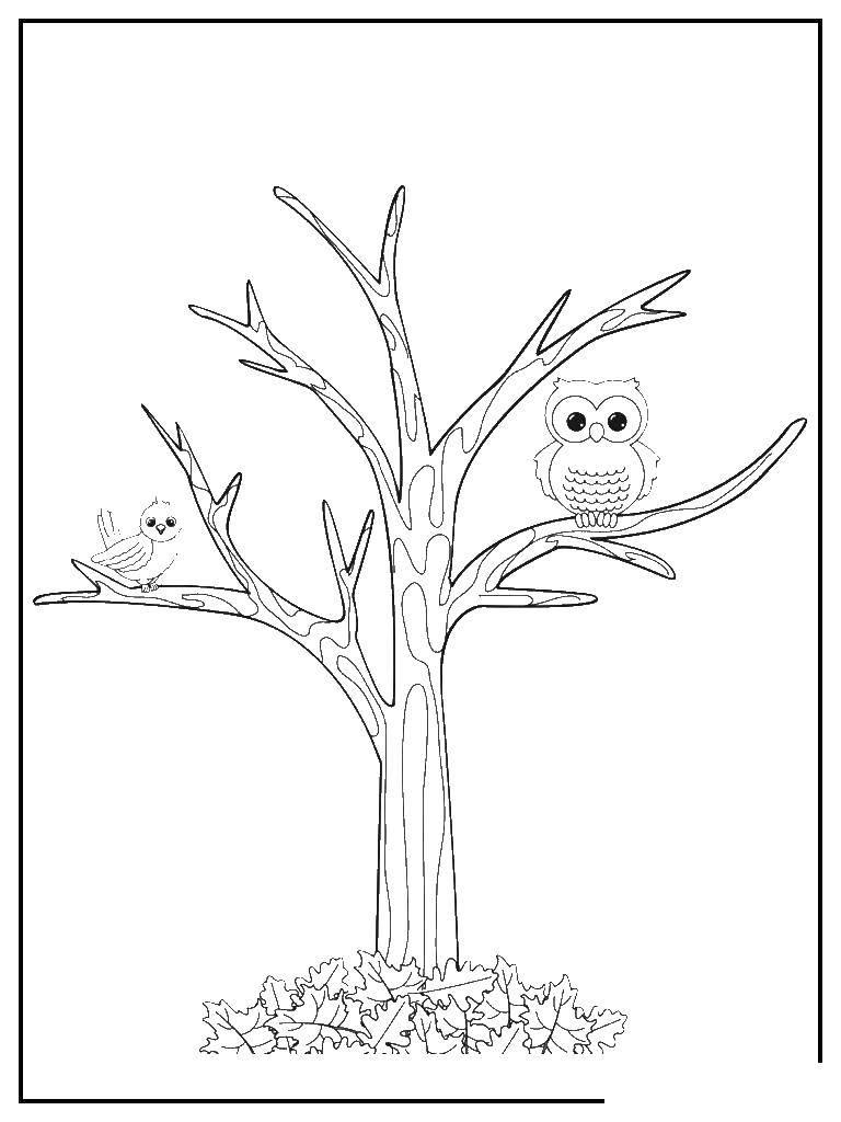 Раскраска Птицы на дерево без листьев Скачать птицы, дерево.  Распечатать ,дерево,