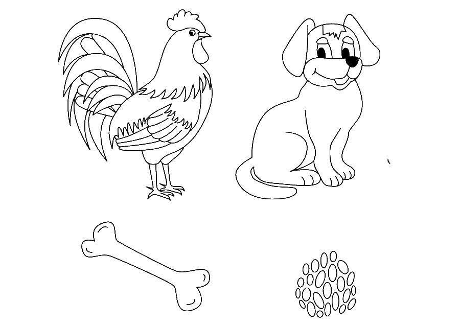 Раскраска Животные. Скачать загадка, животные.  Распечатать ,загадка,