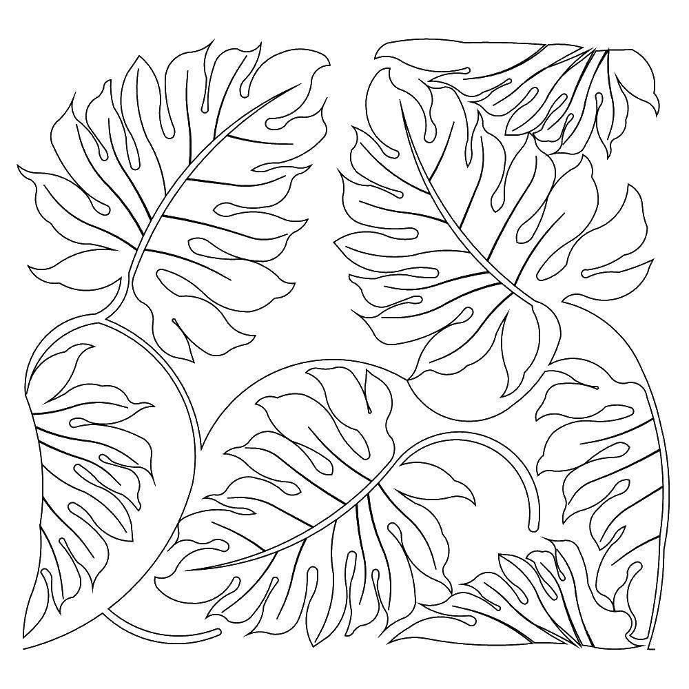 Раскраска Осенний листопад Скачать ,Листья лопуха,.  Распечатать