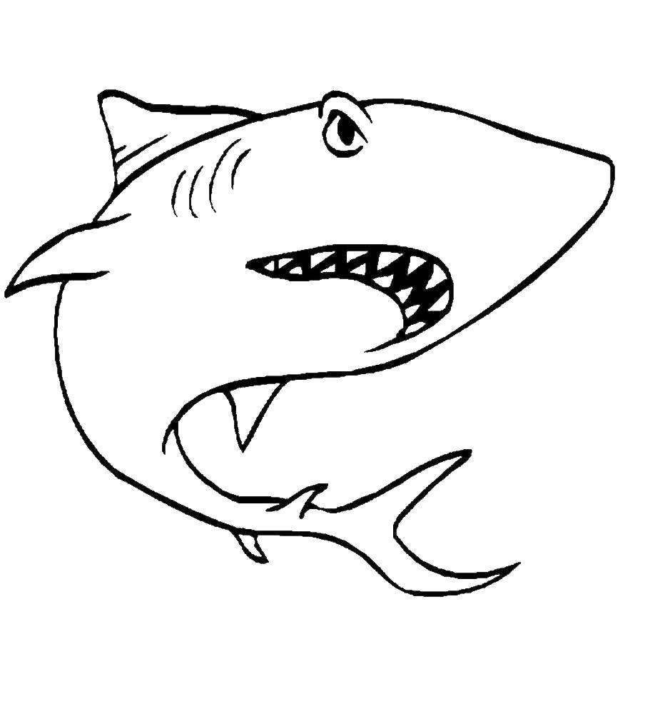 Раскраска рыбы Скачать школьная доска, учитель, школа, .  Распечатать ,школа,