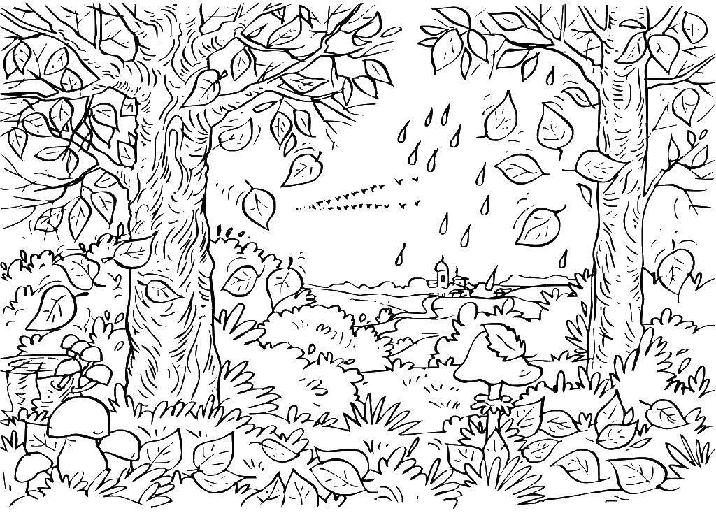 Раскраска Листва, деревья Скачать природа, деревья, листва.  Распечатать ,Природа,