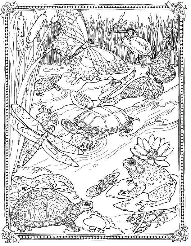 Раскраска Лягушки, черепахи, насекомые. Скачать природа, животные, растения, насекомые.  Распечатать ,Природа,