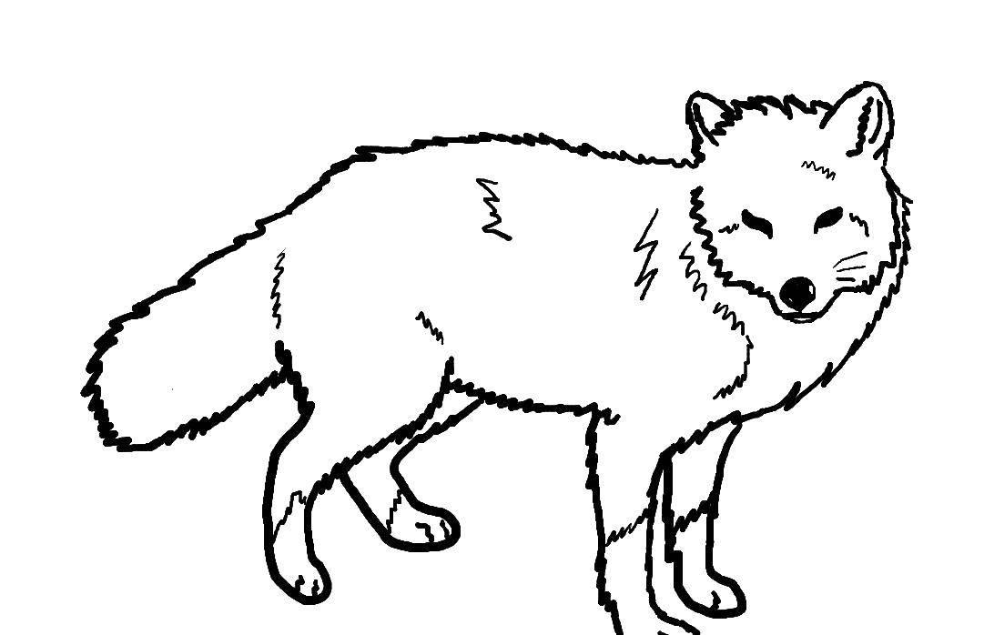 Раскраска Лиса стоит Скачать лиса.  Распечатать ,Лисица,