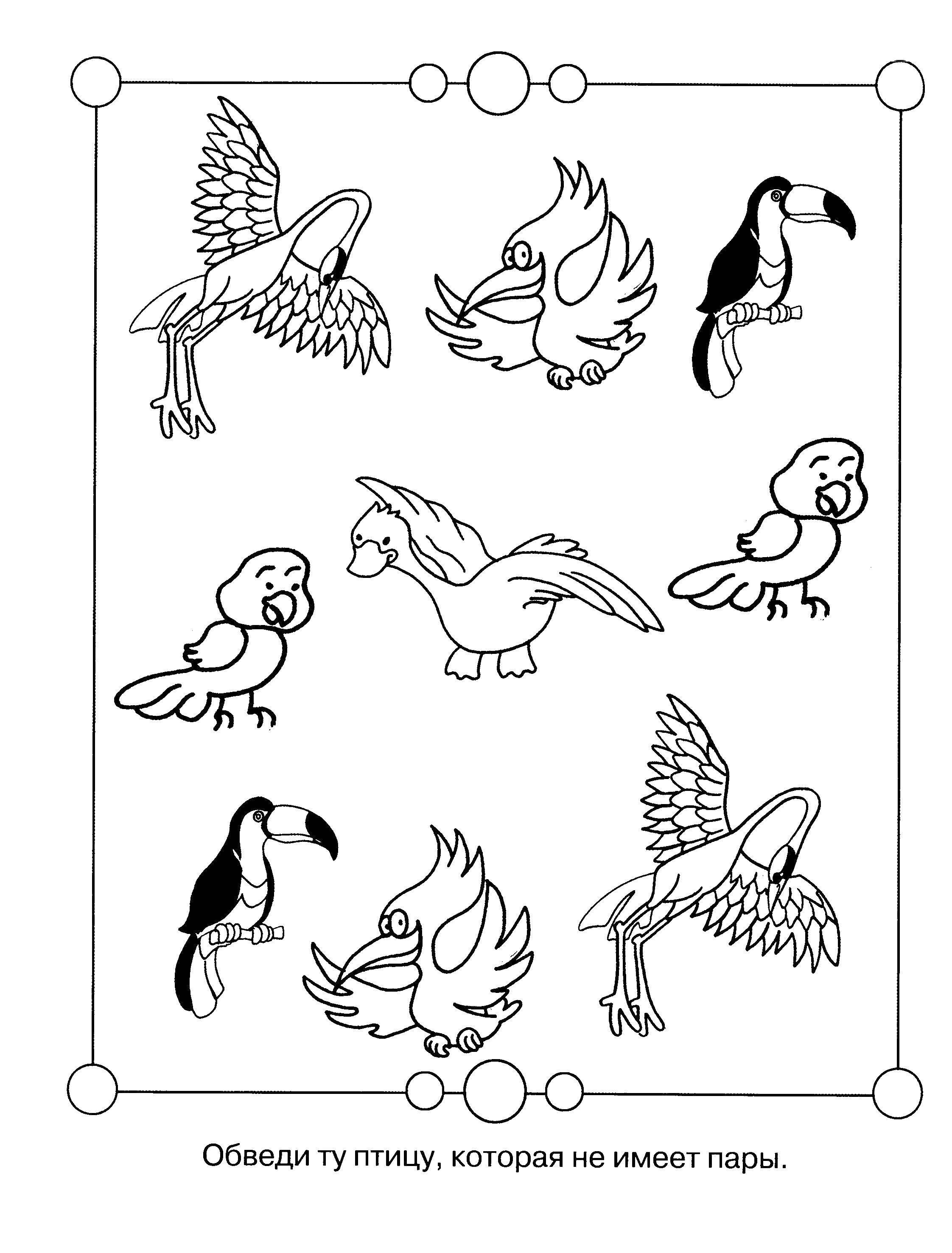Раскраска Обведи ту птицу, которая не имеет пары Скачать Обучающая раскраска, логика.  Распечатать ,ребусы для детей,