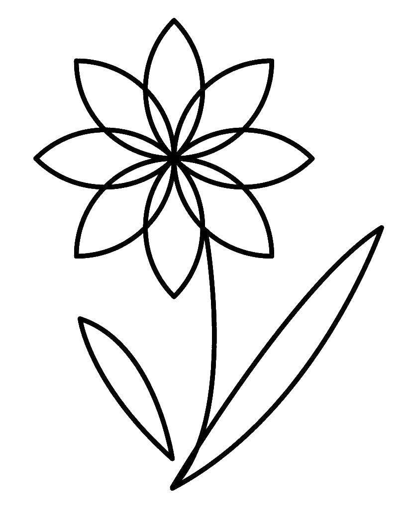 Раскраска цветы Скачать ,лист, тетрадь, линейка,.  Распечатать