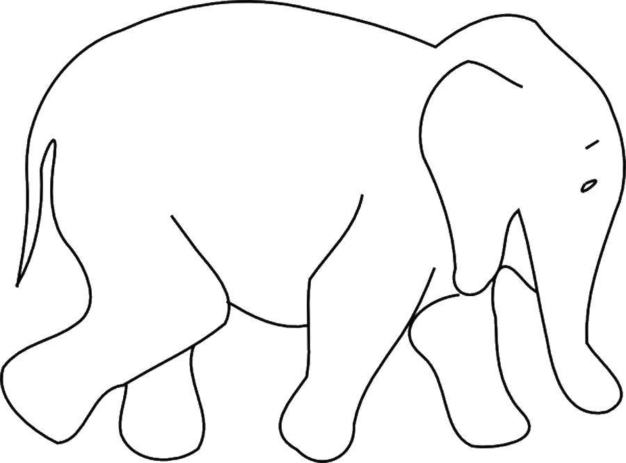 Раскраска Слон Скачать Животные, слон, хобот.  Распечатать ,Животные,