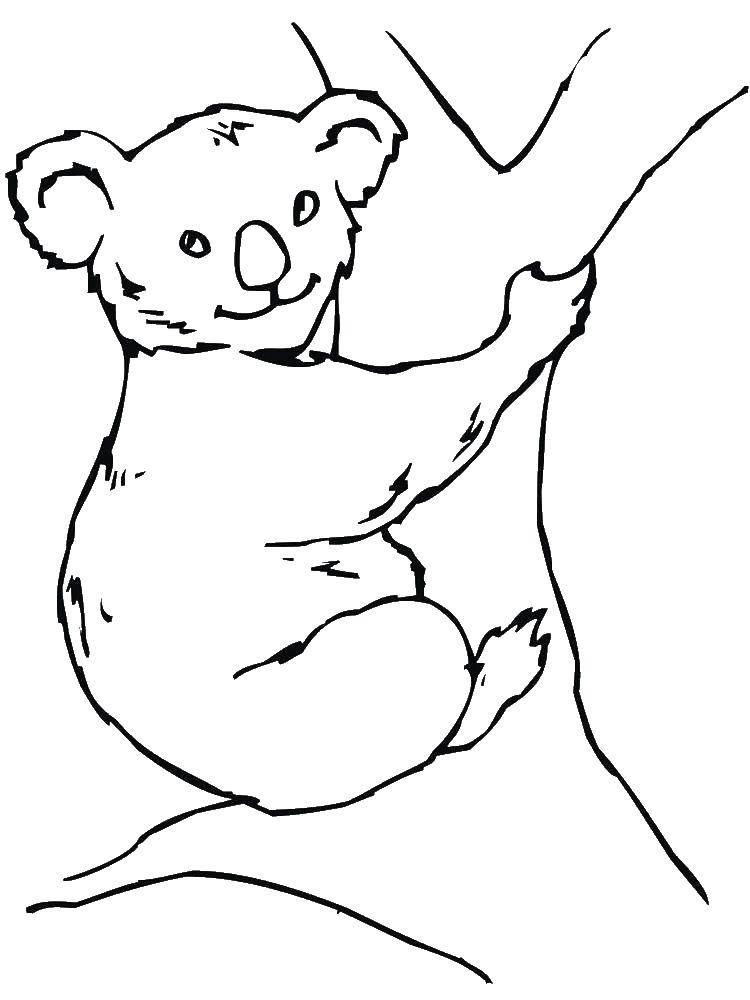 Раскраска Мишка коала на деревце Скачать Животные, мишка.  Распечатать ,Животные,