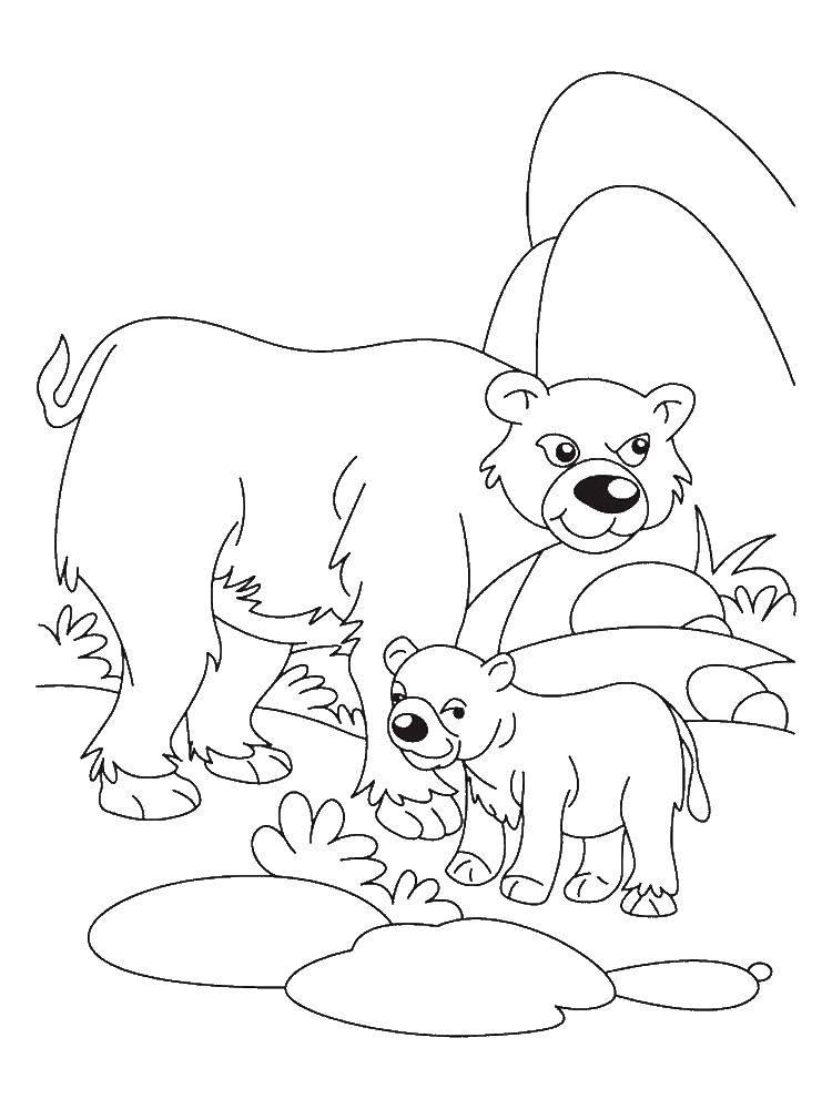 Раскраска Семья медведей Скачать Животные, медведь.  Распечатать ,Животные,