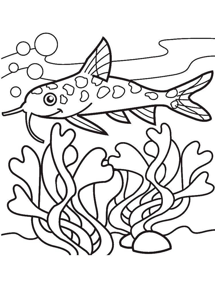 Раскраска Сом у водорослей. Скачать Подводный мир, рыба.  Распечатать ,рыбы,