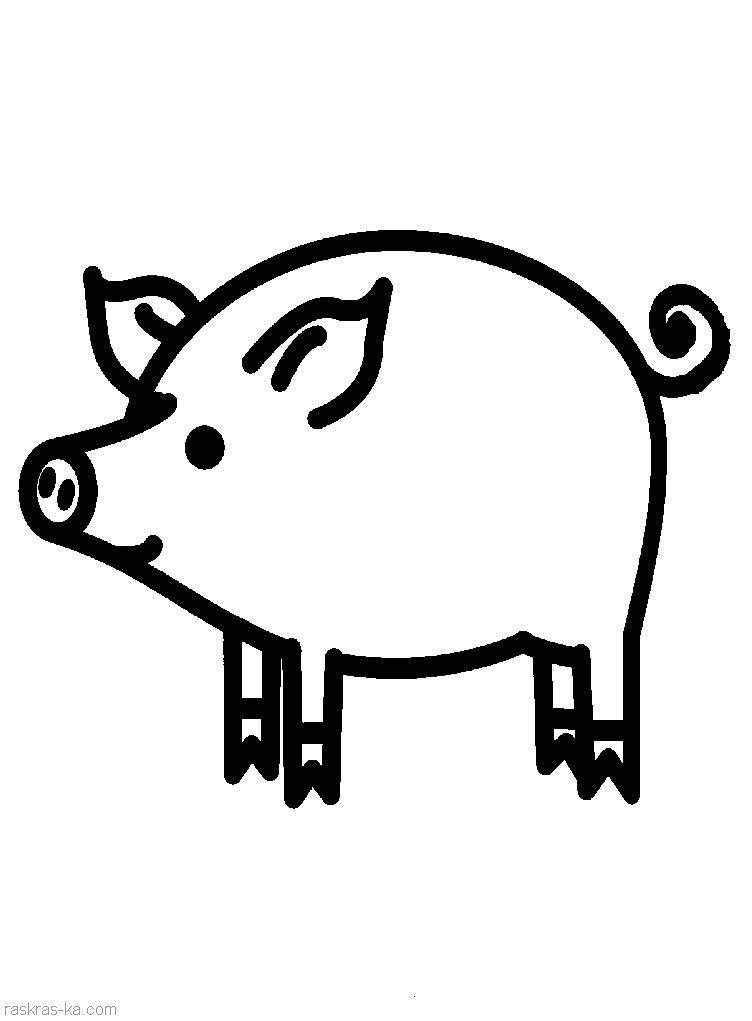 Раскраска Рисунок поросенок Скачать Свинья, поросенок.  Распечатать ,домашние животные,