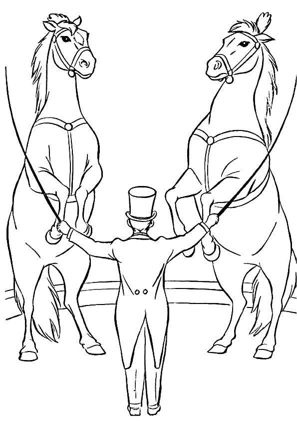 Раскраска Дрессировщик и 2 коня Скачать ,цирк, лошади, дрессировщик,.  Распечатать