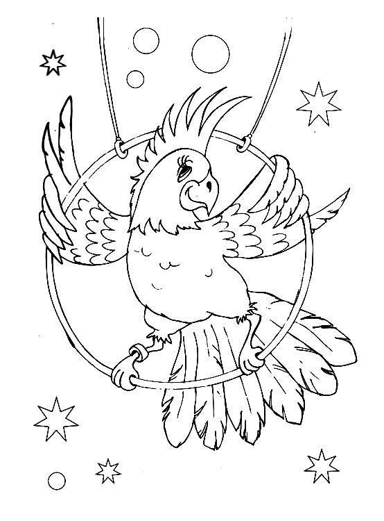 раскраски раскраска цирковой попугай цирк скачать