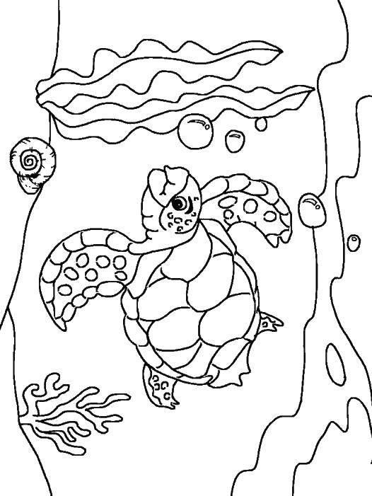 Раскраски морская, Страница:11.