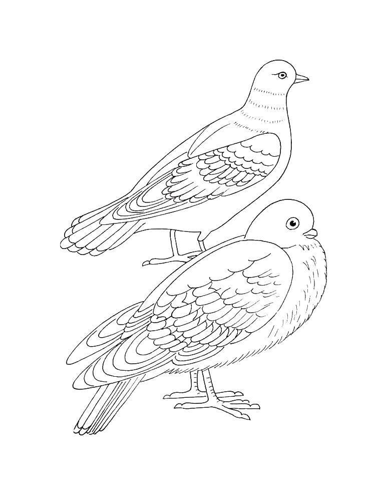 Раскраска птицы Скачать Персонаж из мультфильма, Бен Тен.  Распечатать ,Персонаж из мультфильма,