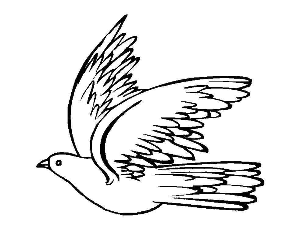 Раскраска голубь мира Скачать ,гринч,.  Распечатать