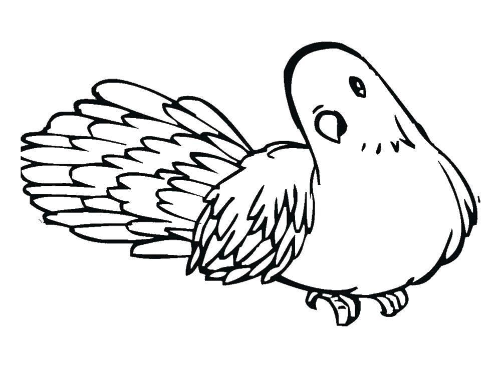 Раскраска птицы Скачать крылья, кошки, кошечка.  Распечатать ,раскраски,
