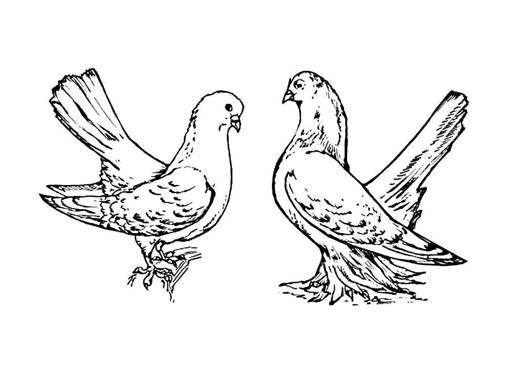 Раскраски крылатый, Раскраска Крылатый единорог в короне ...