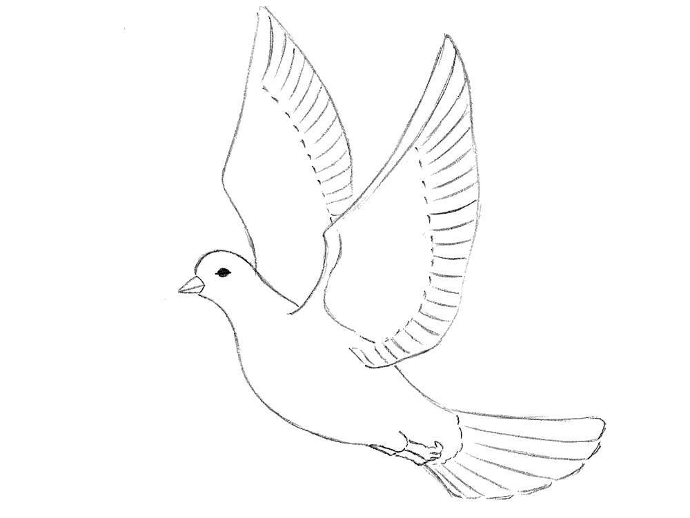 Раскраска 9 мая Скачать ,Птицы,.  Распечатать