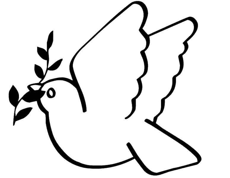 Раскраска Красивый голубь с веточкой Скачать голубь мира, веточка, птицы, птичка.  Распечатать ,голубь мира,